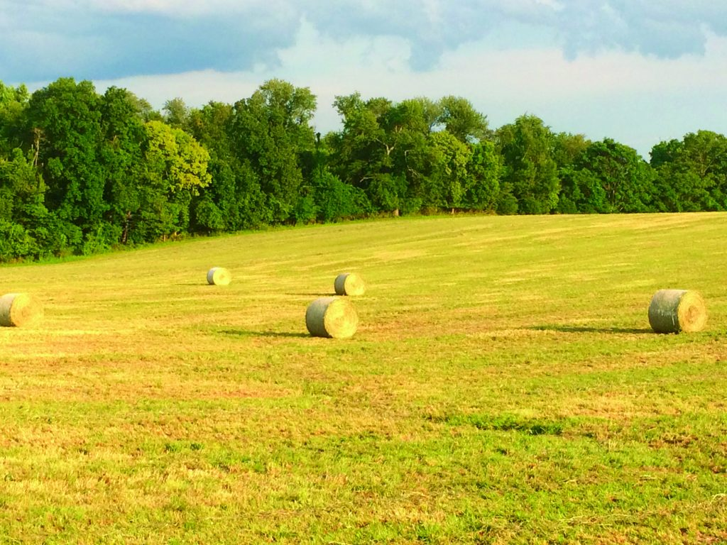 Second Cutting Timothy Hay