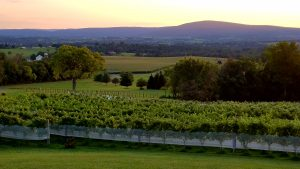 Mazzaroth Vineyards