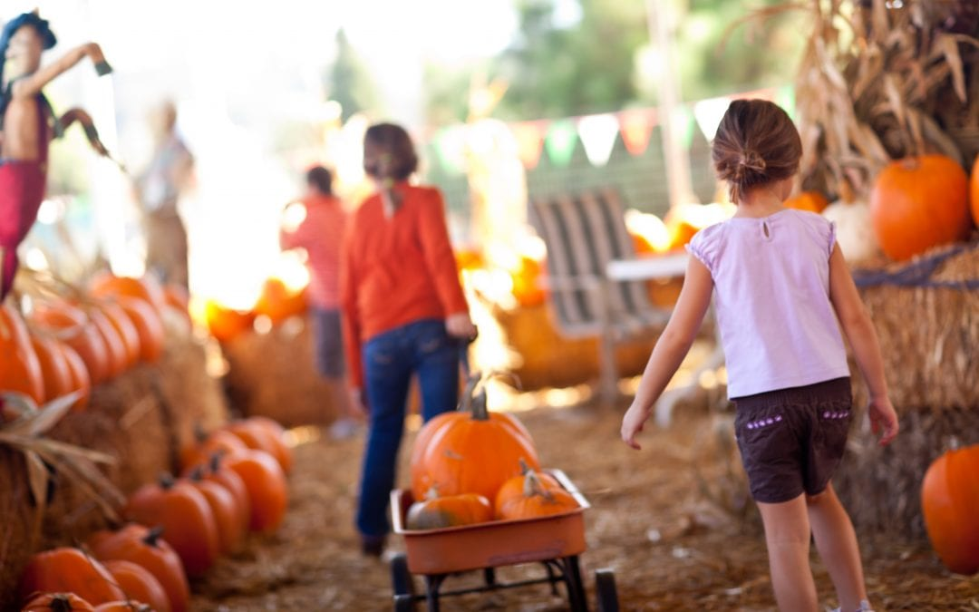 Fall Food and Fun on the Maryland Farm