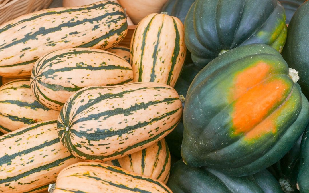 Winter Squash: Colorful and Tasty All Winter Long