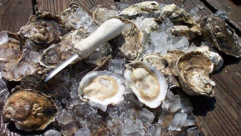 "Maryland Oysters ""Go Hollywood"""