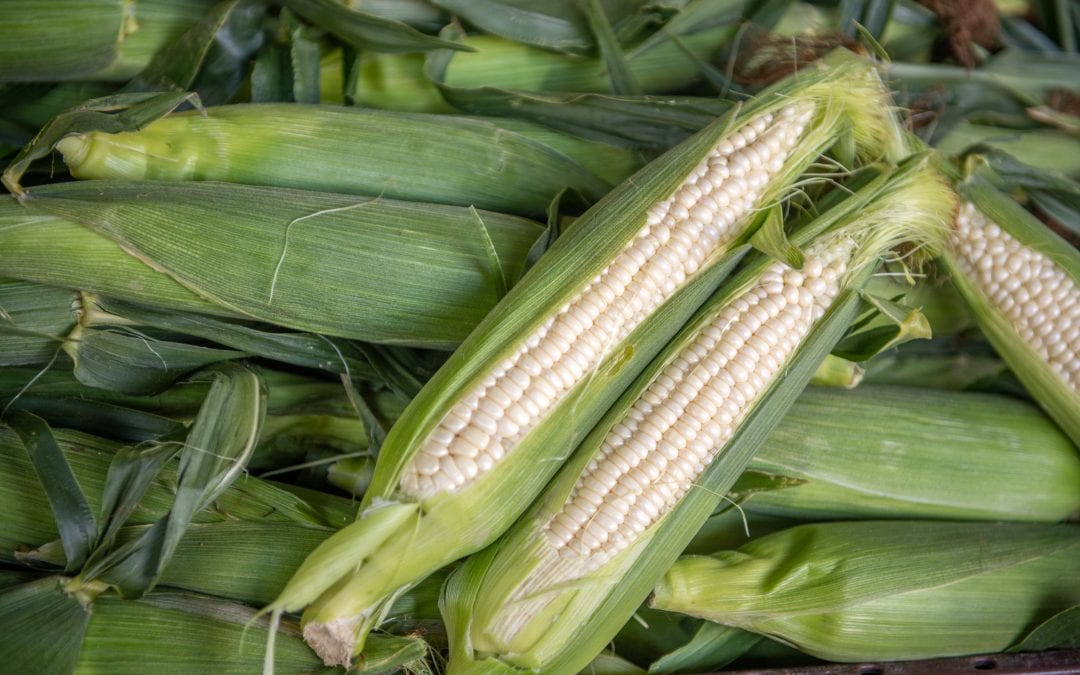 How to Choose the Perfect Ears of Sweet Corn