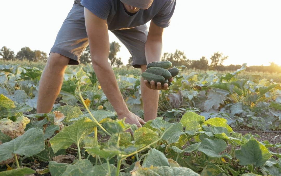Gleaning: A Perfectly Imperfect Way to Give Back