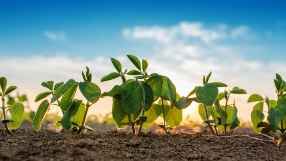 Soybeans are a Sure Bet for this Maryland Farmer