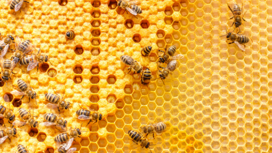 What's the Buzz for Holiday Gifts? Honey, of course!